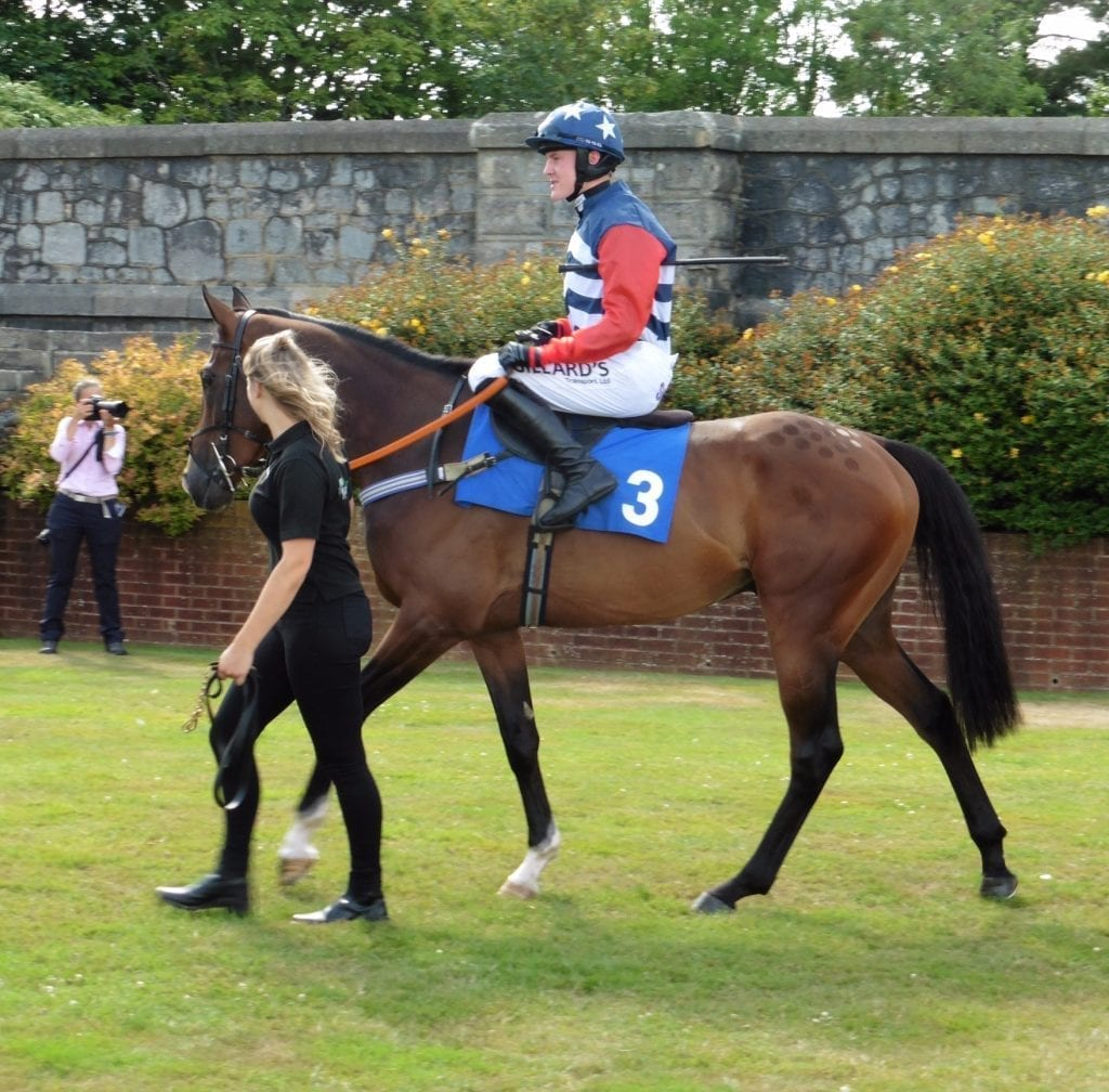 Racehorse with jockey in the paddock