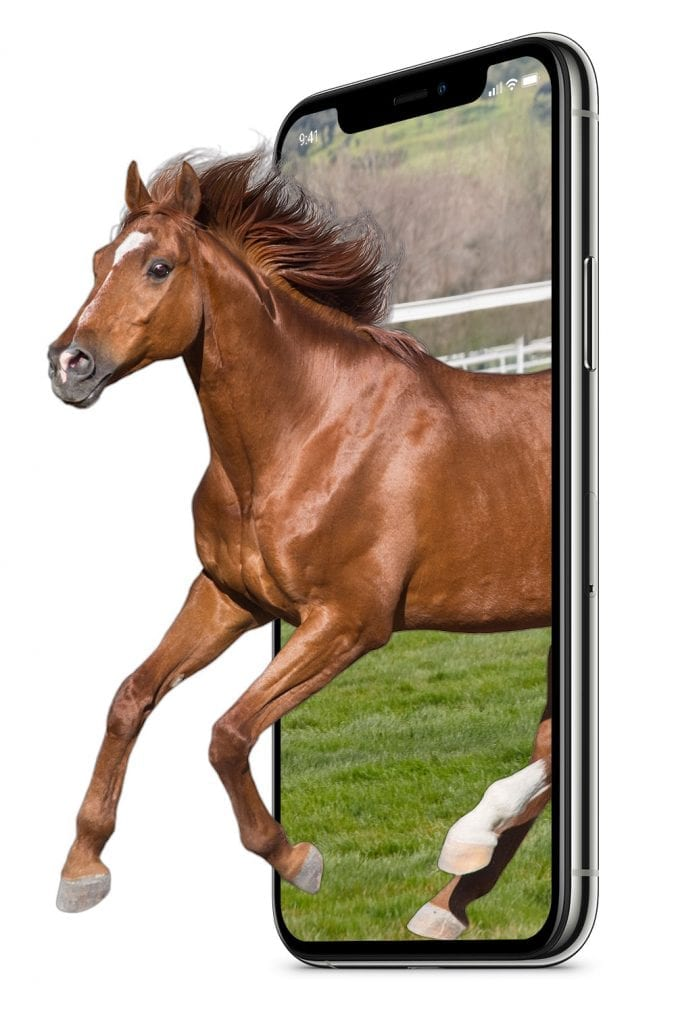Buy shares in a racehorse and find racehorse syndications with our mobile friendly site