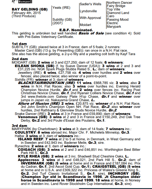 pedigree of racehorse for sale